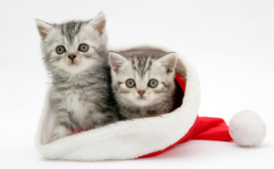 Top 5 Christmas Cat HD Wallpapers 2